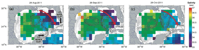Salinity (color) and currents (thin arrows) in the Gulf of Mexico during three weeks in 2011